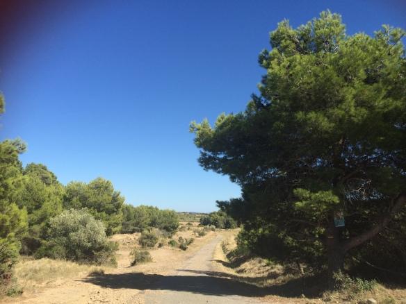 Le chemin d'Olonzac menant au Tourril